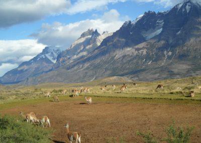 patagonia-303342